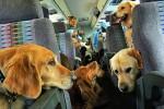 ¡No lo dejes solo! 4 tips para viajar con tu mascota